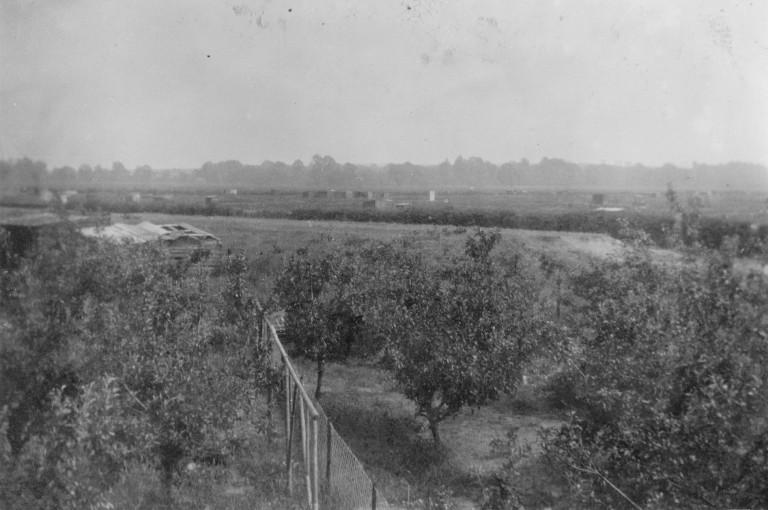 Garden at 58 and 56 Natal Road ex orchard in 1936.