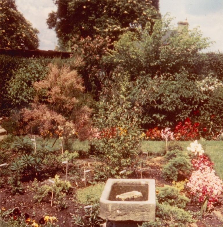 Garden at 58 Natal Road showing stone sink that was formerly the one and only sink in 18 Cyprus Road in 1971.